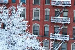 snow day 1.27.2010