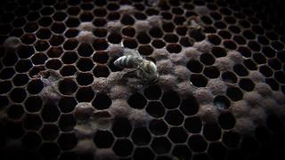 Bee 1 | by Garrreth Bird