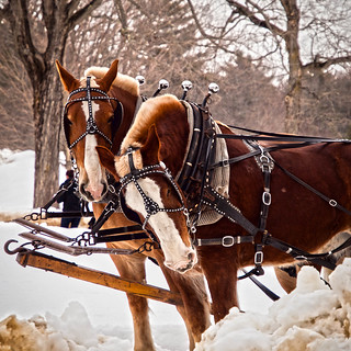 Two Horsepower | by Peter E. Lee