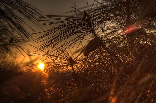 trees sunrise hdr lakezurich