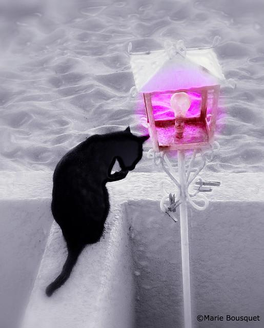Le chat à sa toilette et le lampadaire