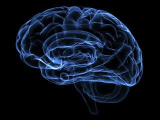 Brain Damage | by Catastrophic Injury Resource Center