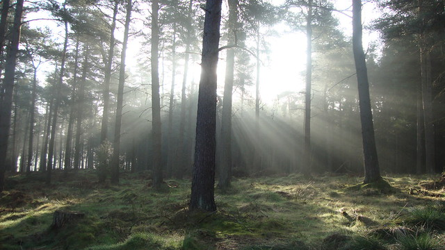 Early morning in the wood