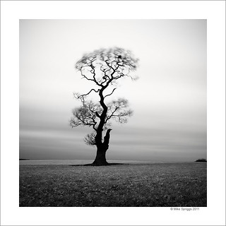Lone Oak Tree, Study 5