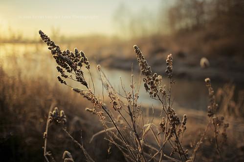morning winter sunrise dawn morninglight frost dof bokeh britishcolumbia surrey february canonef35mmf14lusm surreylake kvdl