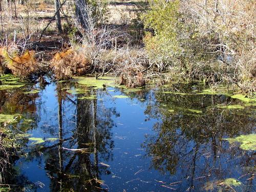 statepark outdoors nc pettigrew downeast