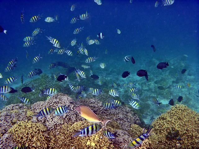 Riff von Embudu-Village/Malediven