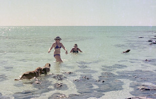 Swimming among the Stromatolites, Hamelin Pool -1976