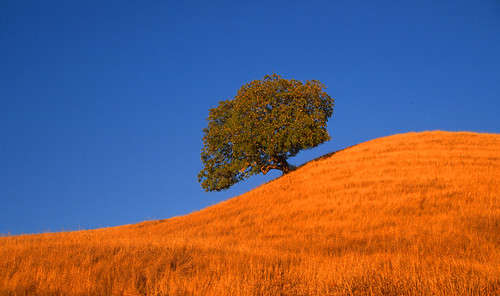 summer nature landscapes sonoma sonomacounty winecountry pineflatroad