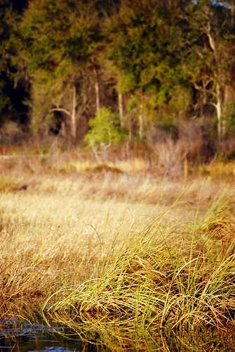 Prairie Grass. Yep here in Florida. | by Anita & Greg