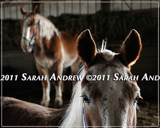 Camelot Auction | by Rock and Racehorses