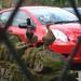 Linden Birds