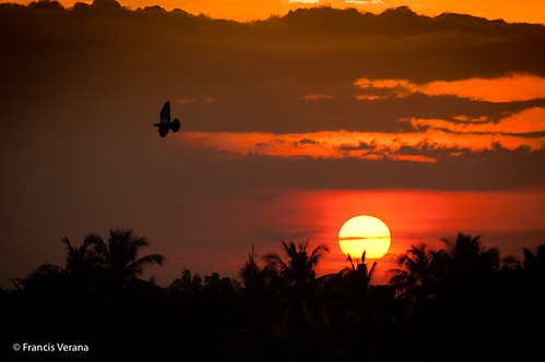 sunset red sky sun bird nikon pigeon philippines silouette nlex d40