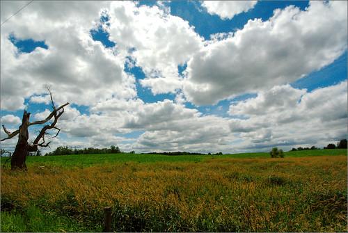 trees sky field clouds landscape raw michigan farm wheat mulliken joeldinda 1v1