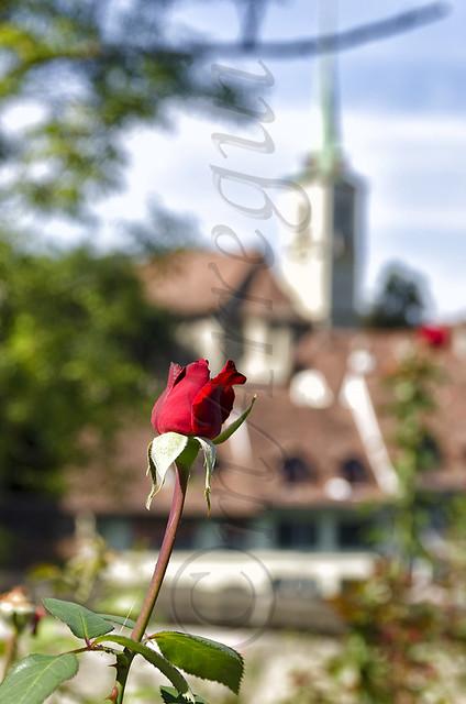 Qué vistas!!...dijo la rosa