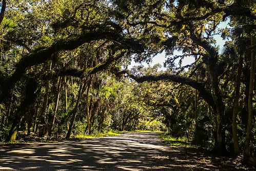 florida myakkariverstatepark upperlakemyakka road trees plants parkroad treetunnel shadows wyojones np