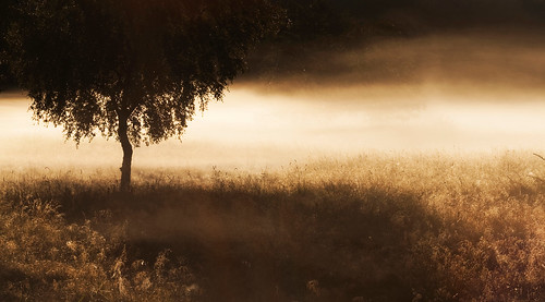 mist tree nature grass fog sepia canon lens landscape prime 26 1352