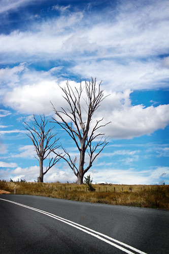 2 Trees | by aussiegall