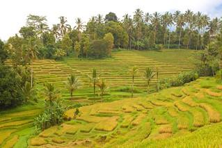 Rice Plantation @ Jatiluwih | by Bertrand Duperrin