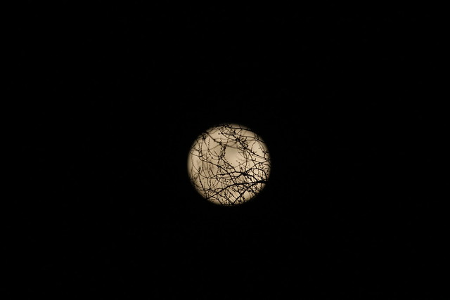 Super Moon and tree buds