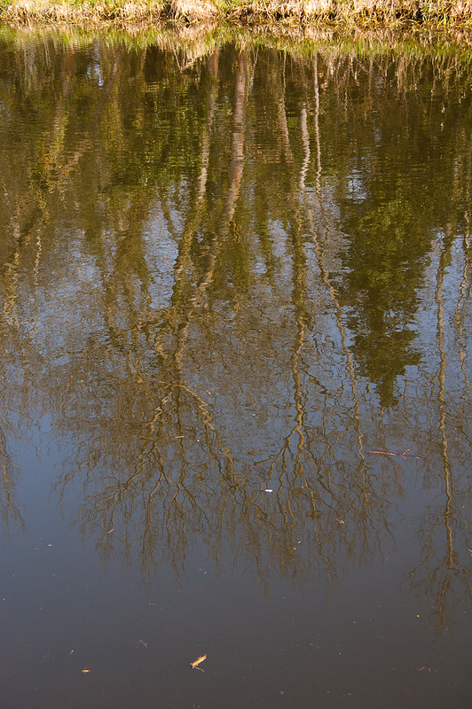 Reflection in a canal