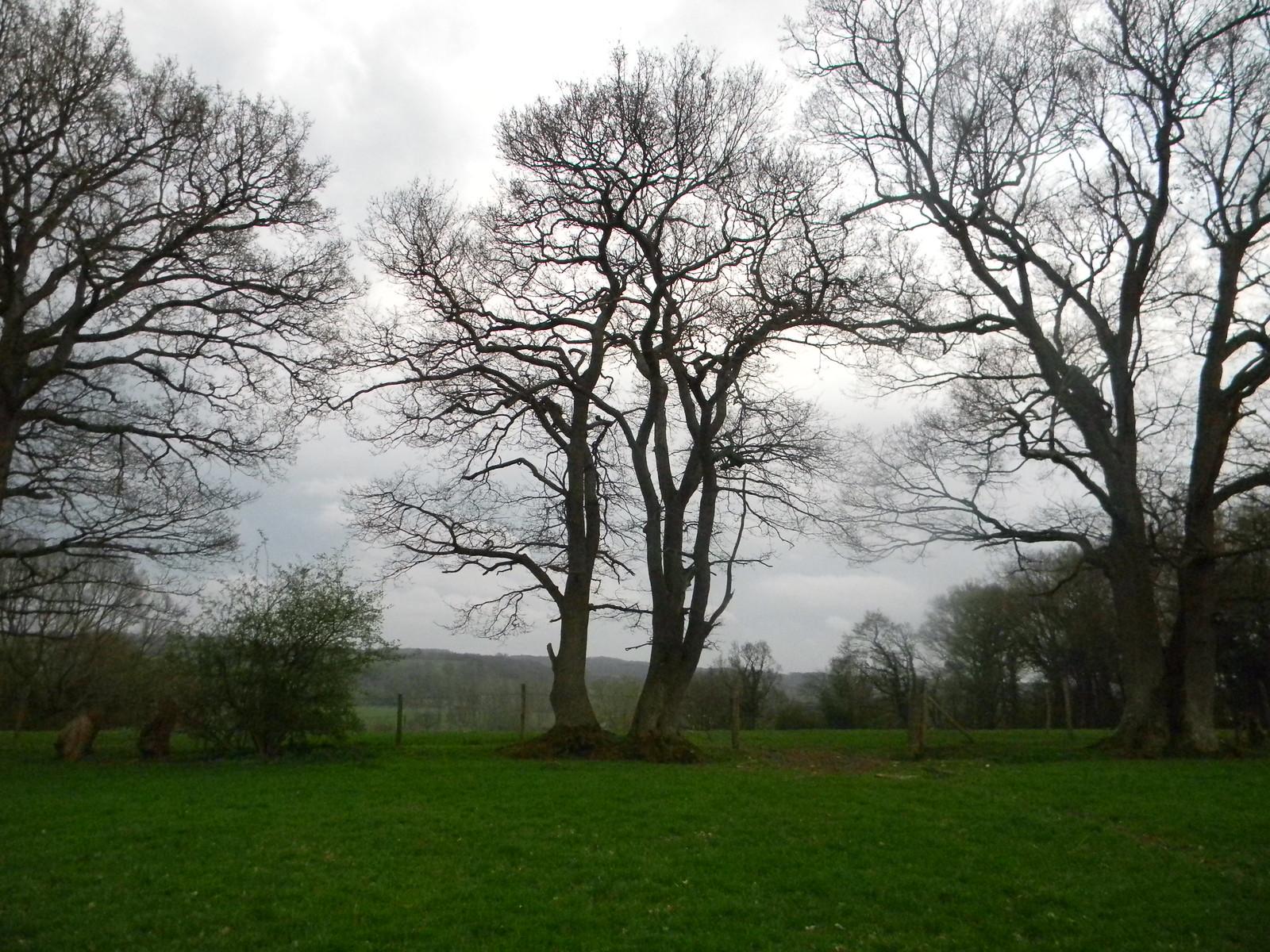 trees Robertsbridge circular (short)