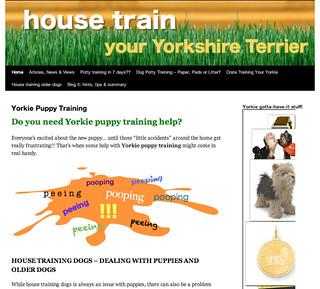 yorkie puppy training   by djg0333