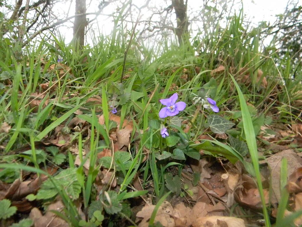 Violet Goring Circular (YHA map walk)