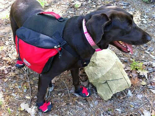 Coco testing out her hiking boots | by Brian's Backpacking Blog
