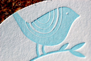Blue Bird on Textured White Paper | by Steve Snodgrass