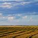The Prairiez