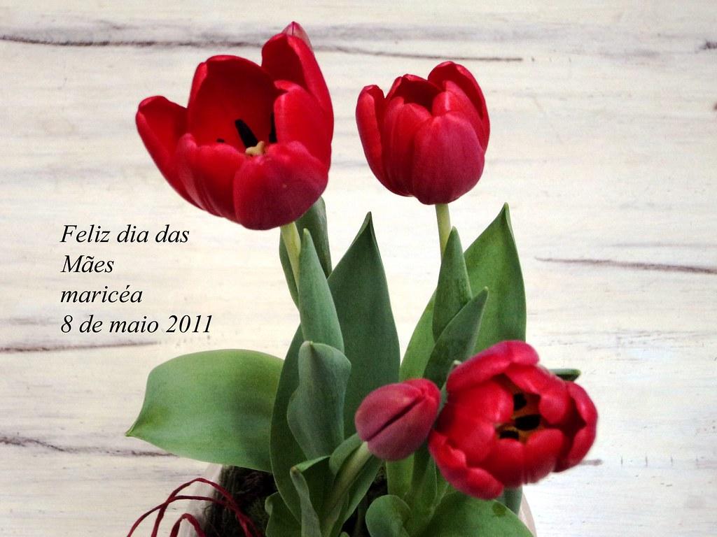 Dia Das Maes A Todas Desejo Um Feliz Dia Das Maes Maricea