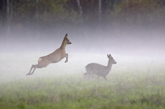 Mammals of Finland