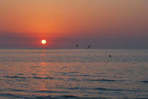 ocean sunset sea bird beach saint st bay gulf florida seagull pass petersburg explore grille explored a 33706 allnaturesparadise