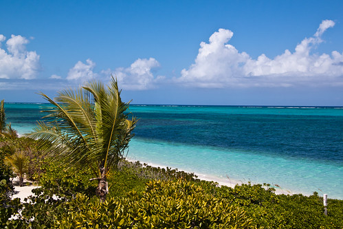 ocean trees plants cloud tree beach water weather clouds turksandcaicosislands turtlecove providenciales atlanticoceanbeachvillas