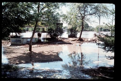 cow flooding flood dam destruction failure idaho disaster collapse damage smithpark rexburg tetonriver breech tetondam bureauofreclamationbor uppersnakerivervalley tetonbasinproject