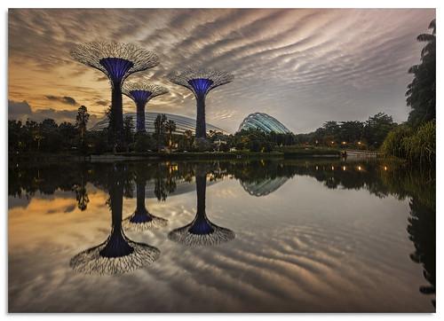 dragonflylake gardensbythebay marinabay singapore 2016 sunrise d600 ngc nikonfxshowcase nikkor1635mmf4 water sky