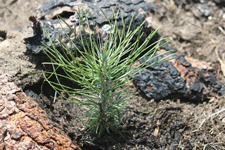 Seedling | by National Garden Clubs