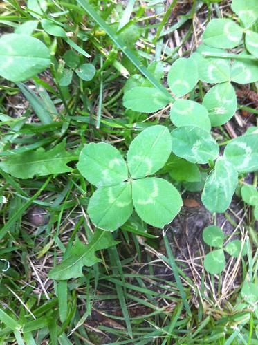 green four leaf phone 4 lucky clover