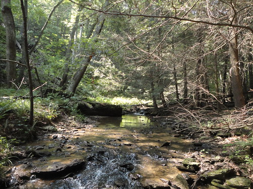 Brook Trout Stream | by Backwater Angler