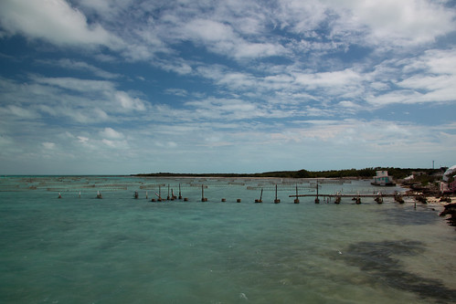 ocean building net water pier structures views turksandcaicosislands leeward providenciales walkinmarina humanmadeobjects