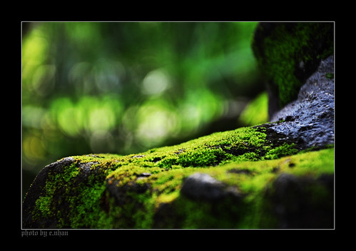 life green art nature closeup landscape moss rocks colours shadows dof bokeh arts backlighting enhan