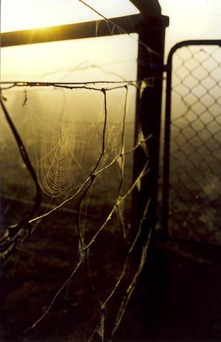morning film nature monochrome sunrise fence pentax spiderweb fences australia