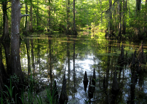 trees reflection lana nature water catchycolors landscape louisiana award bayou cypress mandeville forests awardwinning northlake gramlich fantasticnature canonpowershota570is northlakenaturecenter dragondaggerphoto mar292009 lanagramlich