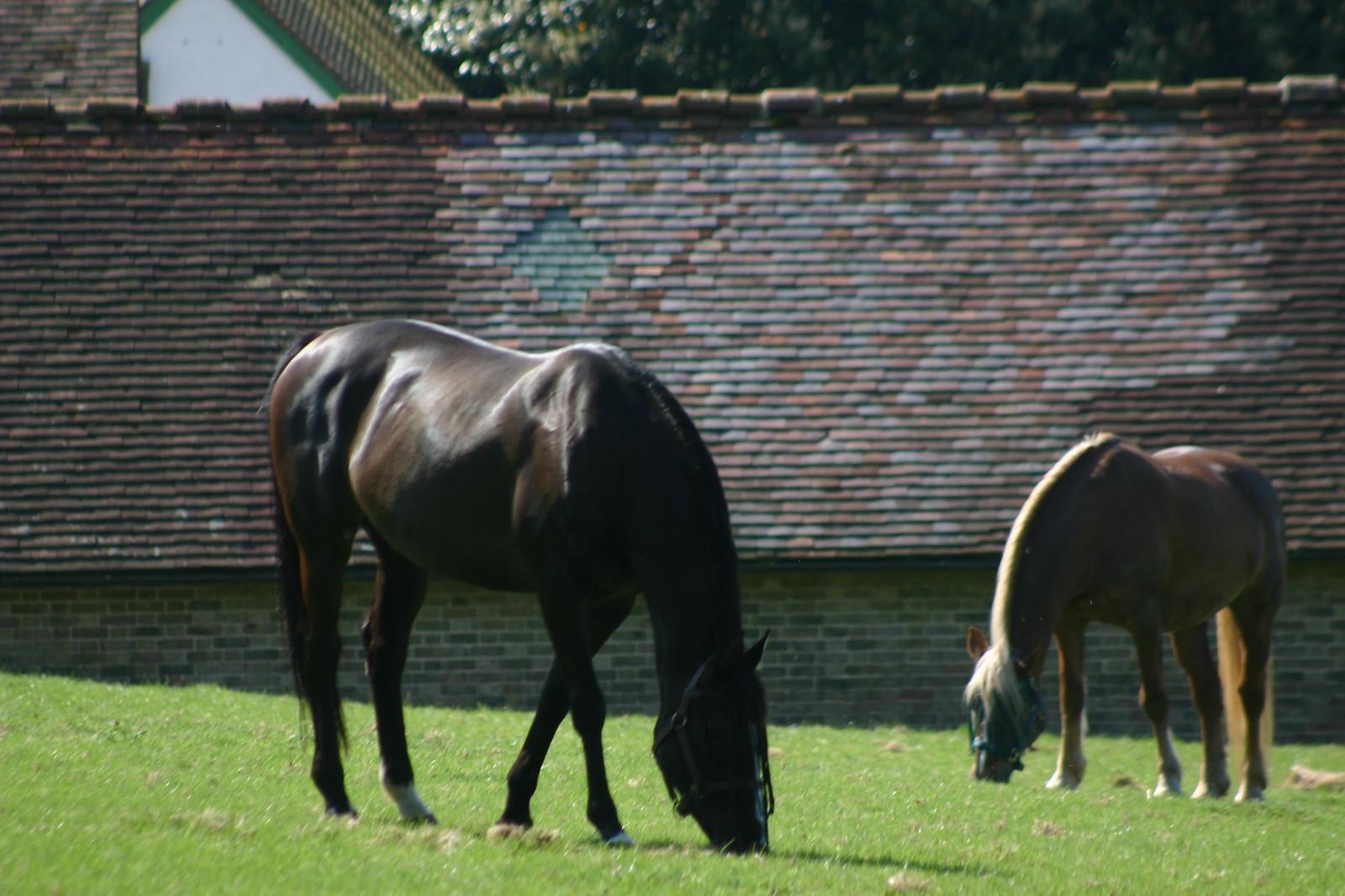 Lovely horsies
