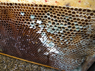 mouldy beeswax comb | by Shawn Caza