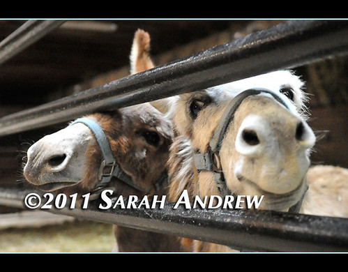 """All right Mrs. Andrew, I'm ready for my close-up..."" 