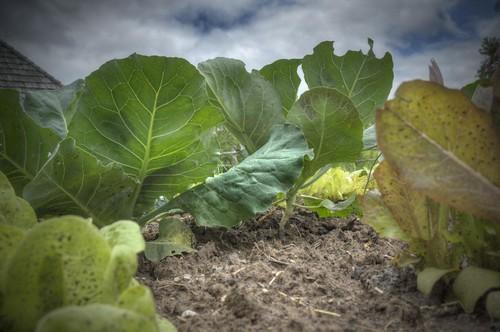 Worm's Eye View in a Garden | by Creativity+ Timothy K Hamilton
