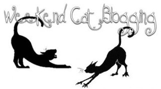 Weekend Cat Blogging | by - Caillean -
