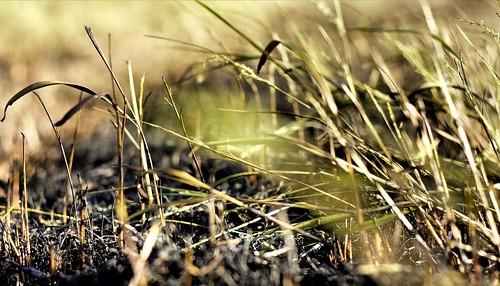 grass fire burnt canon50mmf18